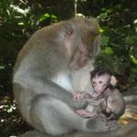 19_monkey_mum_baby.jpg