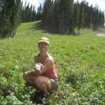 picking wild_raspberries on aspen mountain