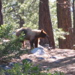 2005_07_Tahoe