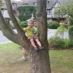 ollie_tree