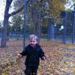 ollie_leaves
