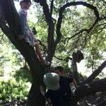 alena_silas_ollie_tree