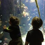boys_academy_aquarium