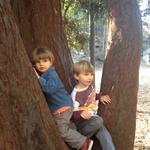 boys_in_tree