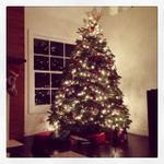 xmas_tree_laurel_canyon_house