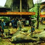 1999_SEAsia_Sulawesi