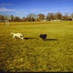 14_dogs_running_park.jpg